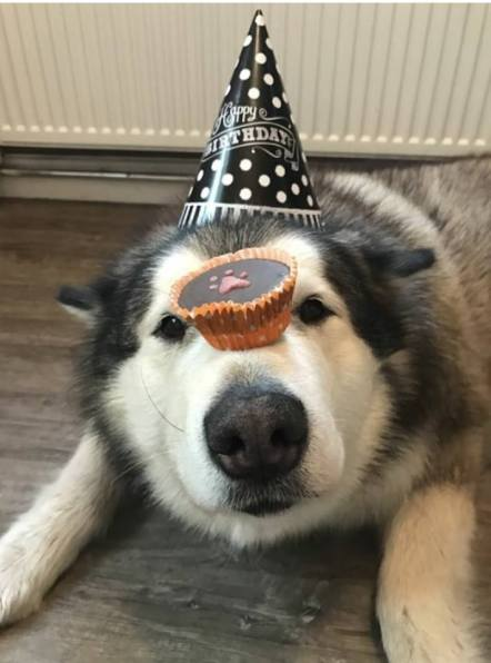 Phil from @lifewithmalamutes on instagram