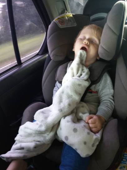 Beau asleep in car