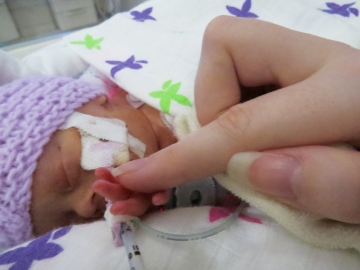 holding hands premature NICU baby silver rose