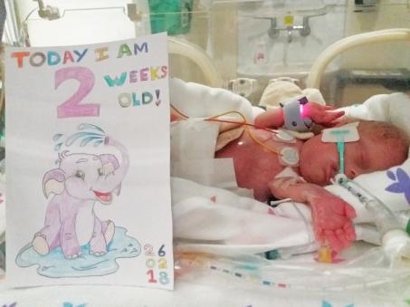home made milestone card NICU premature baby silver rose